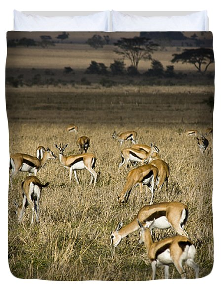 Herd Of Antelope Duvet Cover by Darcy Michaelchuk