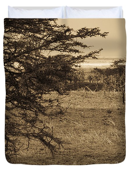 Male Lions Snoozing In Shade Duvet Cover by Darcy Michaelchuk