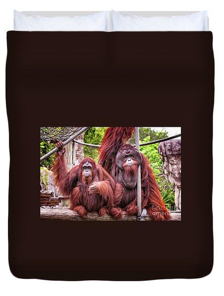 Orangutan Couple Duvet Cover by Stephanie Hayes