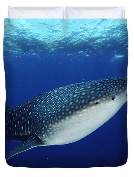 Whale Shark Rhincodon Typus Duvet Cover by Jurgen Freund