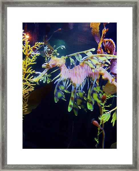 Sea Horse Parade 2 Framed Print