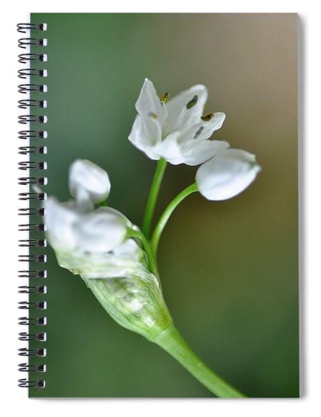 White Blossom 3 Spiral Notebook