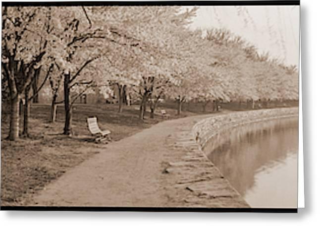 Cherry Blossoms View At Tidal Basin Greeting Card