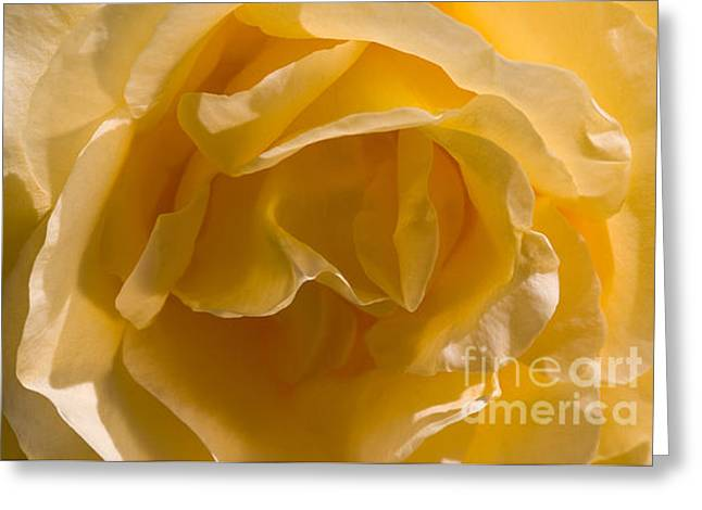 Yellow Rose Ruffles Greeting Card