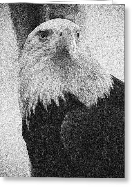Etched Eagle Greeting Card by Georgiana Romanovna