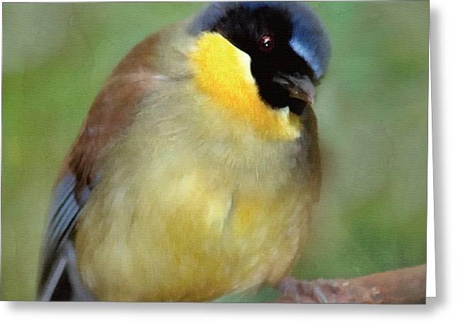 Morning Bird Song Greeting Card