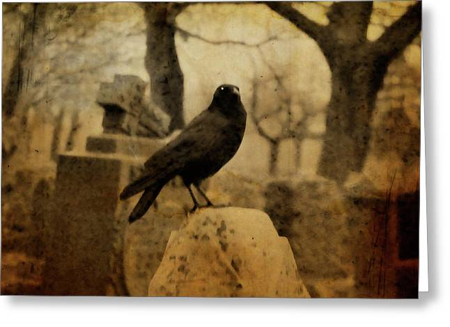 Study Of The Surly Raven Greeting Card by Gothicrow Images