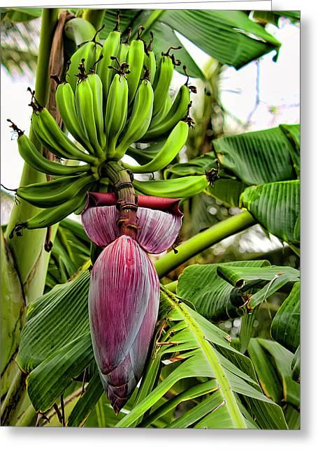 Banana Flower Greeting Card by Dan McManus