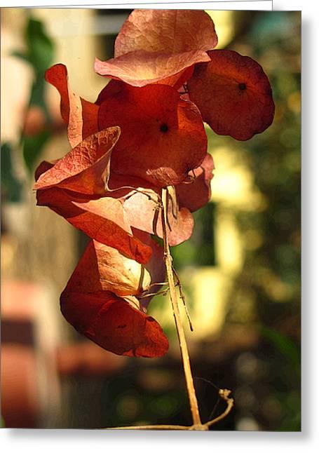 Beauty Of Nature Greeting Card by Ankit Changawala