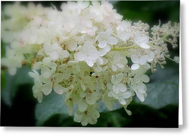 Greeting Card featuring the photograph Hydrangea by France Laliberte