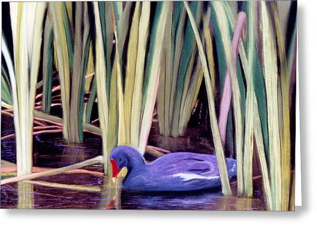 Greeting Card featuring the pastel Moorhen by Jan Amiss