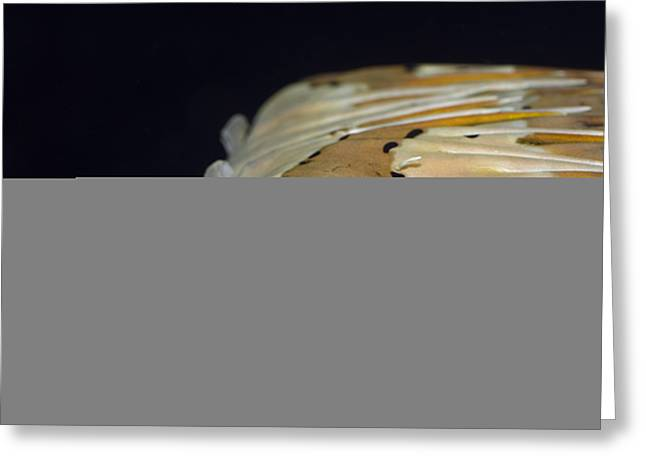 Tropical Fish Porcupinefish Greeting Card by MotHaiBaPhoto Prints