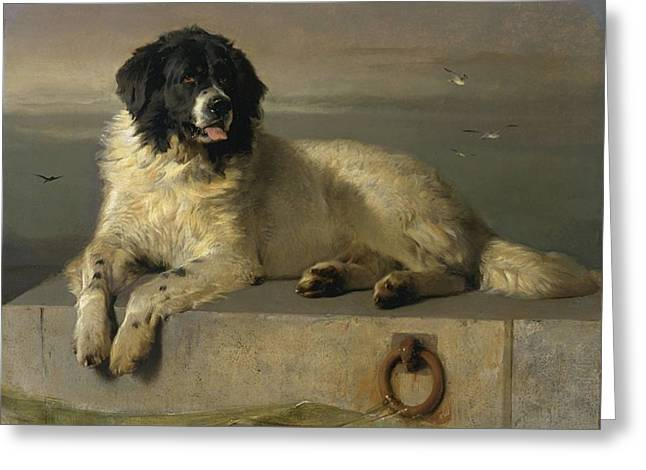 A Distinguished Member Of The Humane Society Greeting Card by Edwin Landseer