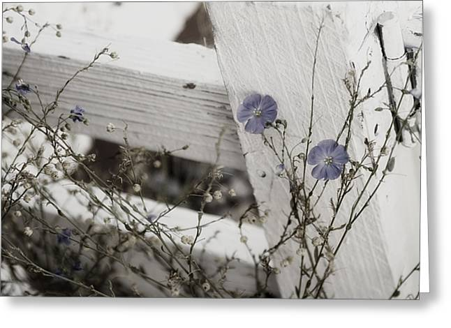 Against The Fence Greeting Card by Rebecca Cozart