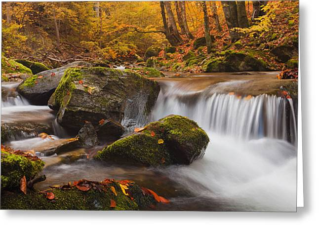 Autumn Forest Greeting Card by Evgeni Dinev