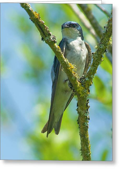 Greeting Card featuring the photograph Bird In Tree by Rod Wiens