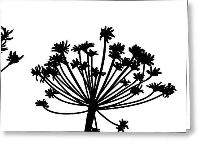 Black And White Dandelion Part 2 Greeting Card by Nomi Elboim
