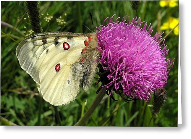 Blancarosa Greeting Card by Jean-Michel Ammon