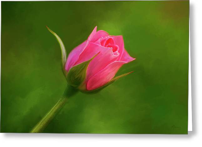 Blooming Pink Rose Greeting Card by Michael Greenaway