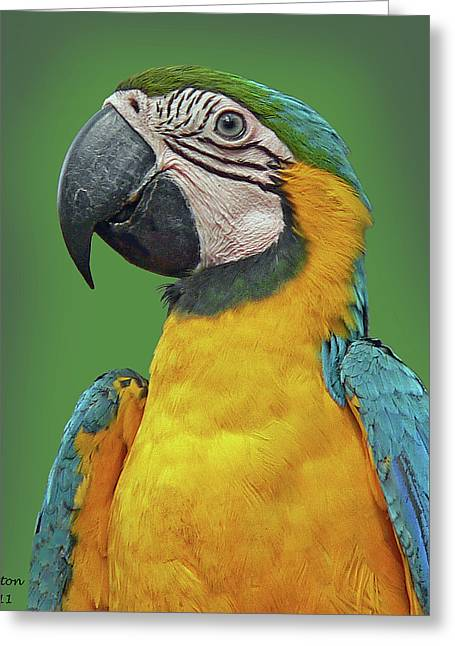 Blue-and-yellow Macaw Greeting Card