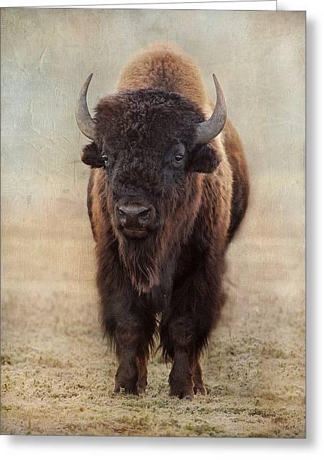 Buffalo Bull Greeting Card
