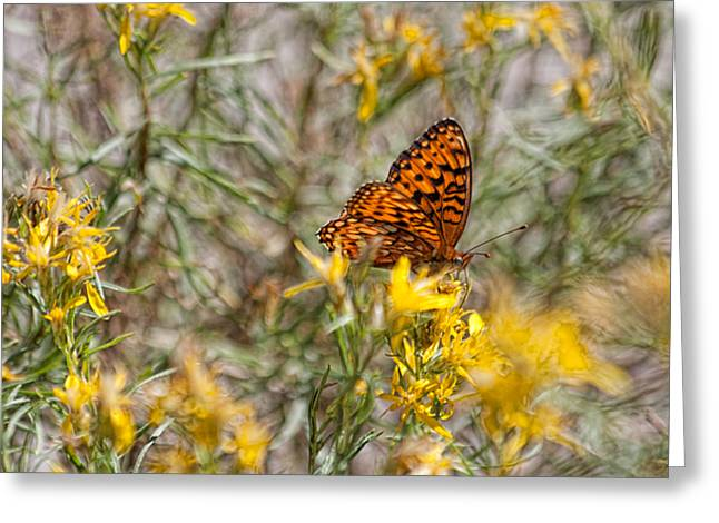 Butterfly Brunch Greeting Card by Bonnie Bruno