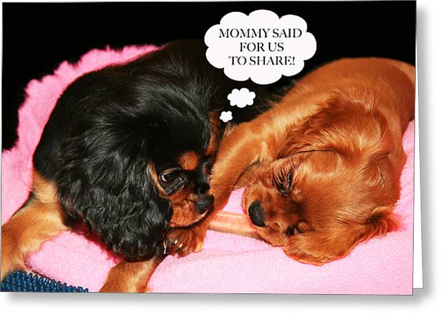 Cavalier King Charles Spaniel Let's Share Greeting Card by Daphne Sampson
