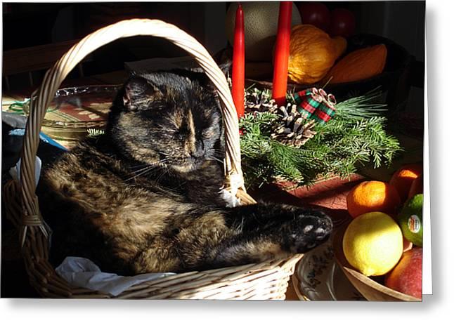 Christmas Cat Basket Greeting Card by Laura Tasheiko