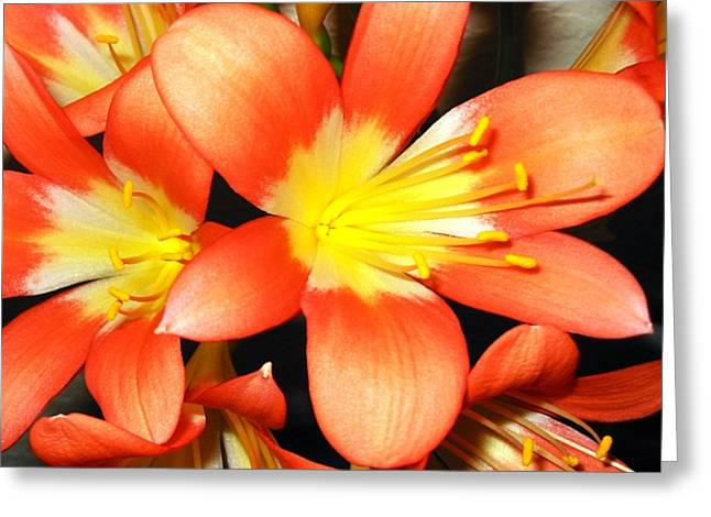 Clivia Greeting Card