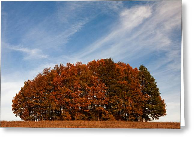 Compact Forest Greeting Card by Evgeni Dinev
