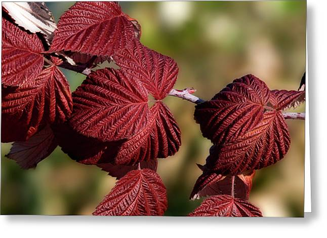Crimson Red Leaves Greeting Card