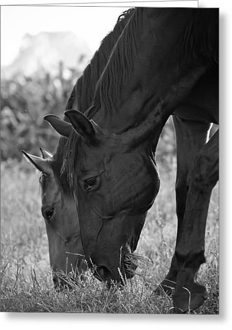 Das Pferde Greeting Card by Edward Myers