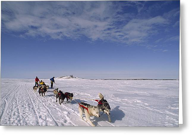 Dog Sled Crosses Frozen Lake Greeting Card by Gordon Wiltsie