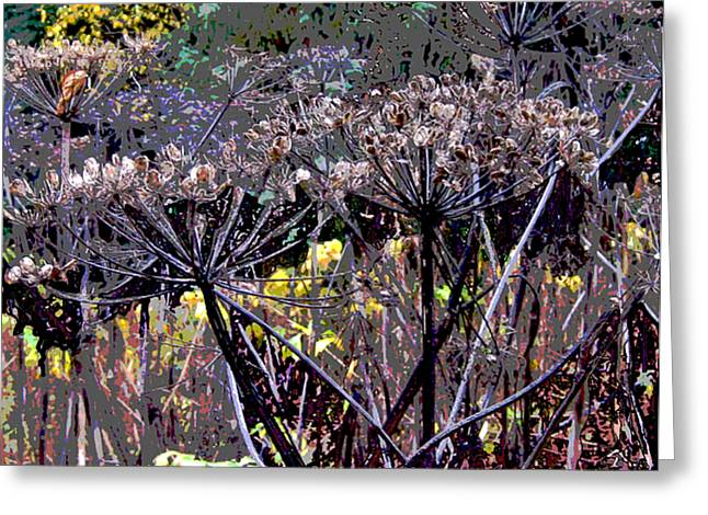 Fall Cow Parsnips Greeting Card by Anne Havard