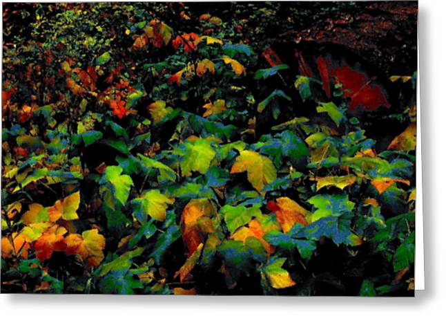 Fall Thimbleberry Greeting Card by Anne Havard