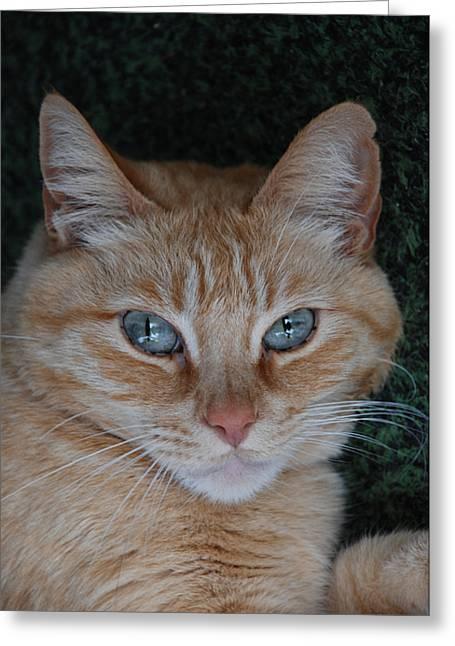 Fat Cats Of Ballard 5 Greeting Card