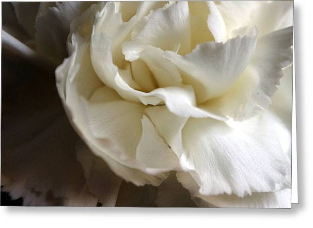 Greeting Card featuring the photograph Flower Beauty by Deniece Platt