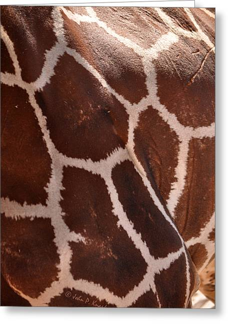 Greeting Card featuring the photograph Giraffe Study 02 by John Knapko