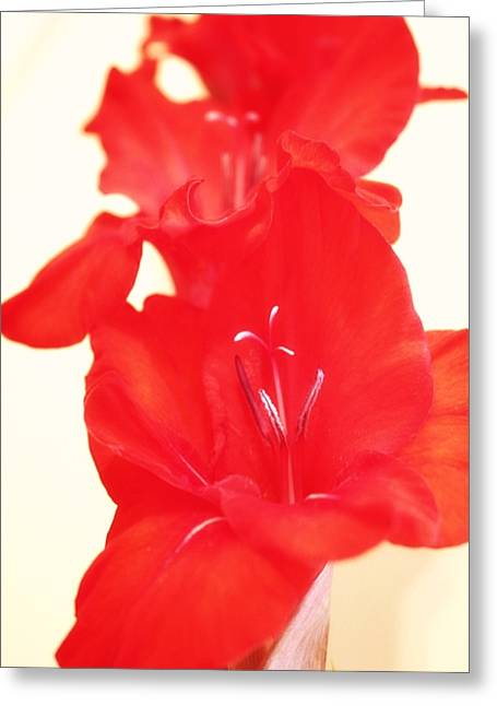 Gladiola Stem Greeting Card by Cathie Tyler
