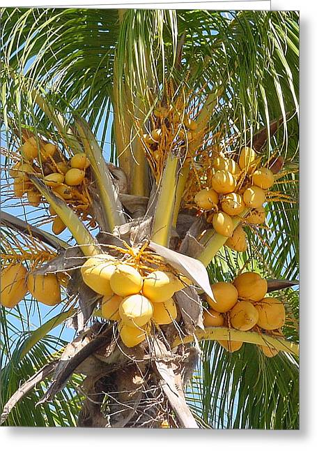 Golden Coconuts Key West Greeting Card