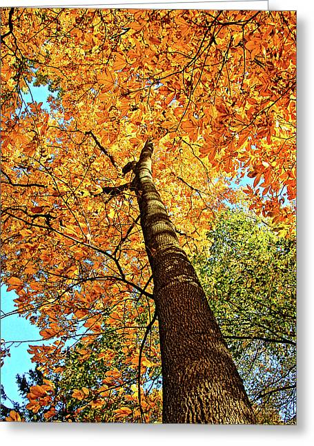 Golden Hickory Greeting Card