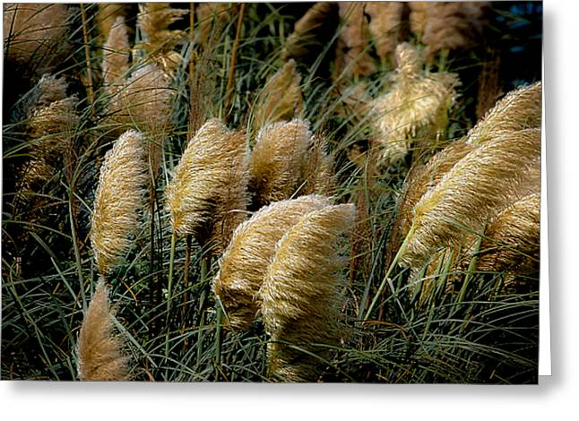 Golden Pampas In The Wind Greeting Card by DigiArt Diaries by Vicky B Fuller