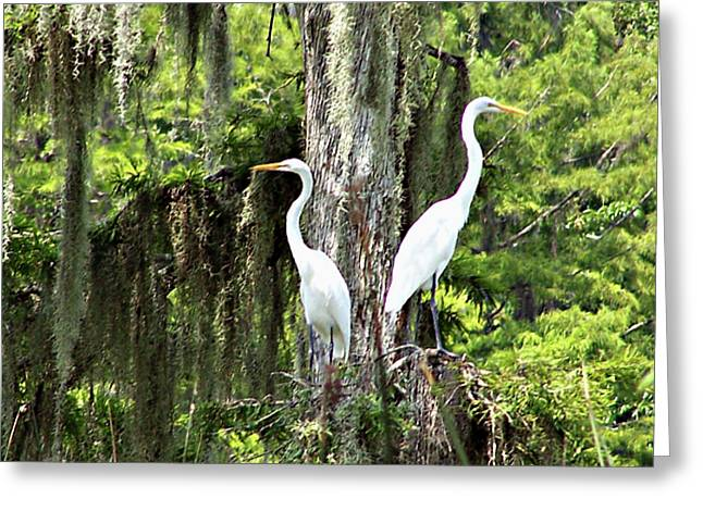 Great White Egrets Greeting Card