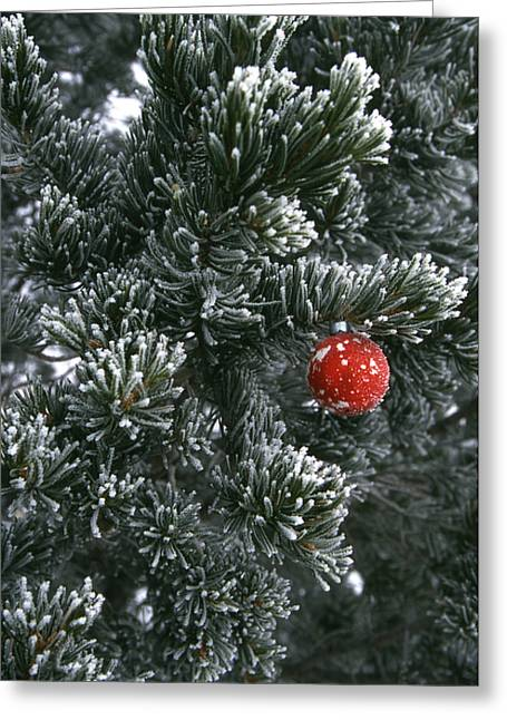 Holiday Ornament Hanging On Snow Dusted Greeting Card by Kate Thompson