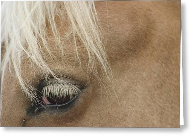 Horse's Eye Greeting Card by Dagmar Batyahav