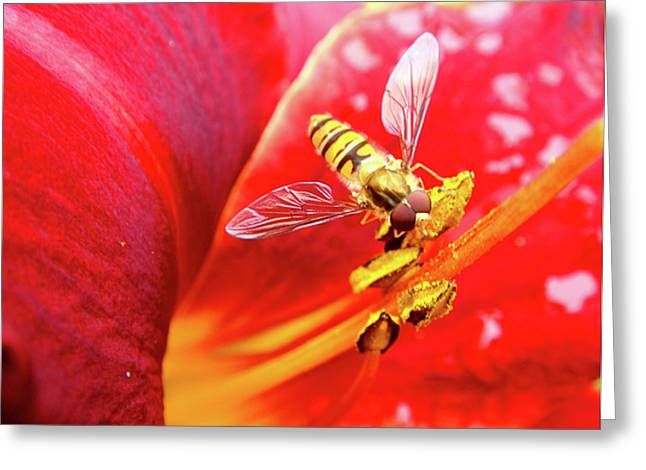 Hoverfly Greeting Card by Roberto Alamino