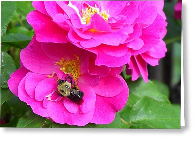 Jc And Bee Greeting Card by Mary-Lee Sanders