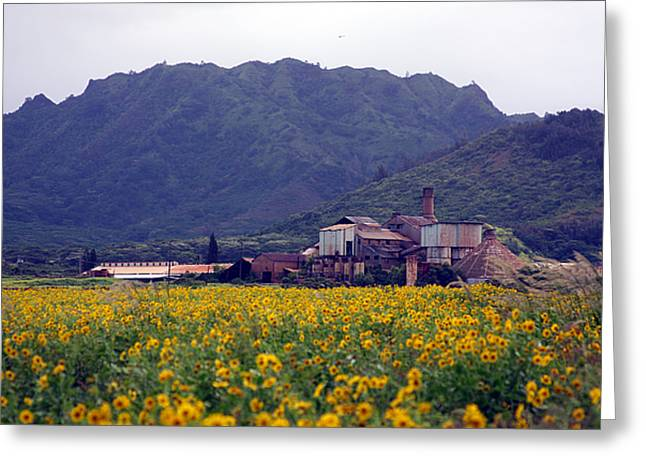 Koloa Sugar Mill Greeting Card