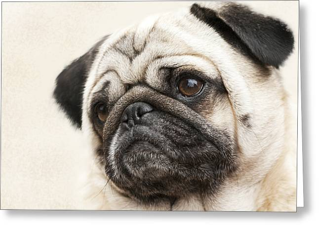 L-o-l-a Lola The Pug Greeting Card