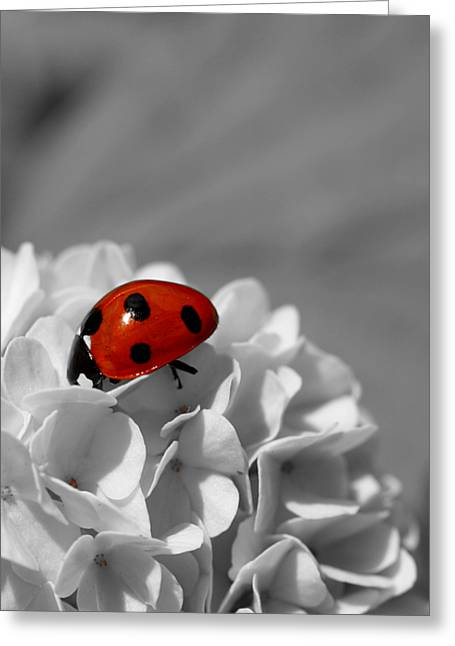 Lady Bug Sc Greeting Card